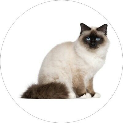 Birman Kitten Cat Ragdoll Cool Gift #2825 2 x Vinyl Stickers 10cm