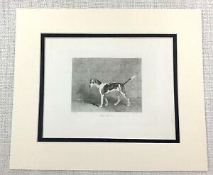 1843 Antico Stampa Beagle Hound Cane Caccia Fox Caccia Cani Tafano Incisione
