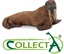 Figurine-Morse-Animal-11-cm-Statue-Collection-Animaux-Marin-Jouet-Collecta-88569 miniature 1