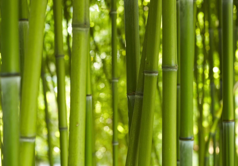Fototapete Bambus Hain Bambuswald Wald Bambusstamm  Tapete Vliestapete