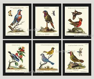 Unframed Print Set of 6 Antique Birds Butterfly Botanical Home Decor Wall Art