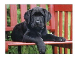 New-Clementoni-The-Black-Dog-500-Piece-Labrador-Retriever-Puppy-Jigsaw-Puzzle