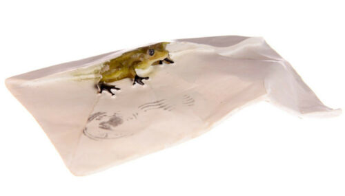 new frog in gift card envelope ornament figure sculpture charming gift in box