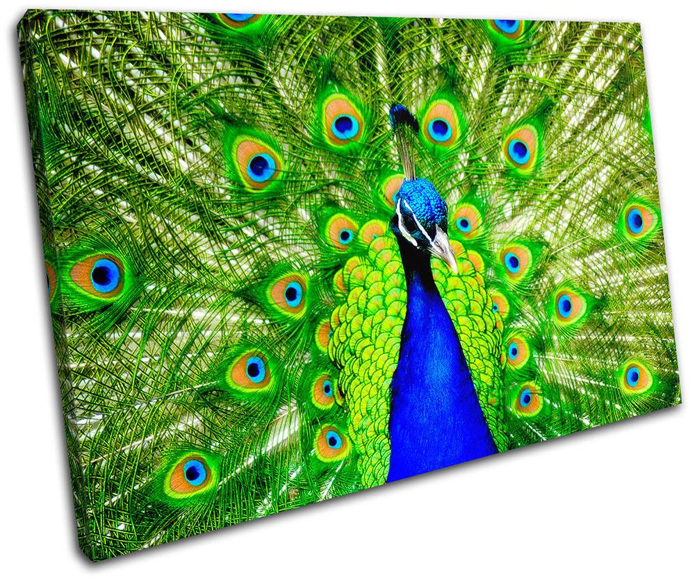 Peacock Feathers Animals SINGLE Print TOILE murale ART Photo Print SINGLE 6b5329