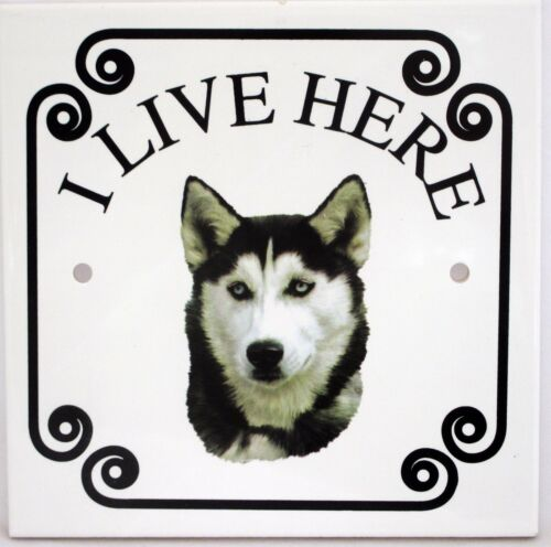 """Husky sibérien /""""je vis ici/"""" 150 x 150 mm Dalle hand decorated in UK"""