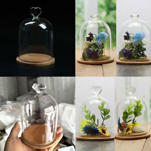 Glass Display Bell Jar Dome With Wooden Base Diy Transparent