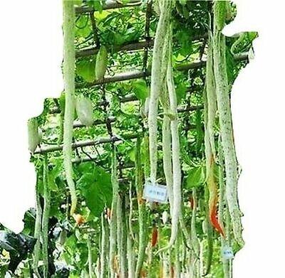 Zitronengurke samenfest von unserer Farm farbige Salate 10 Samen