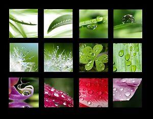 GLASBILD-DEKO-WAND-BILD-DECO-FLOAT-GLAS-TROPFEN-BLATTER-BLATT-WASSER-NATUR-GRUN