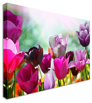 Purple Tulip Battle Canvas Wall Art Pictures For Home Interiors