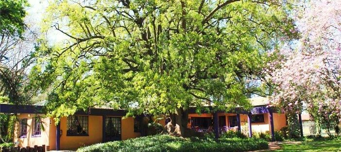 Big Tree BB for Accommodation, Conference Vanue, Guest House in Midrand