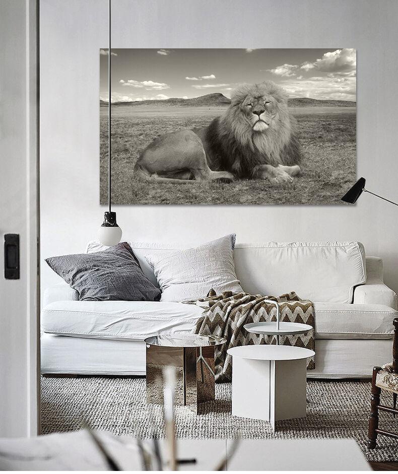 3D Schwarz-Weißes Löwe Foto 90  Fototapeten Wandbild BildTapete AJSTORE DE Lemon