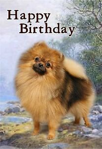 Pomeranian Dog Design A6 Textured Birthday Card Bdpomeranian By