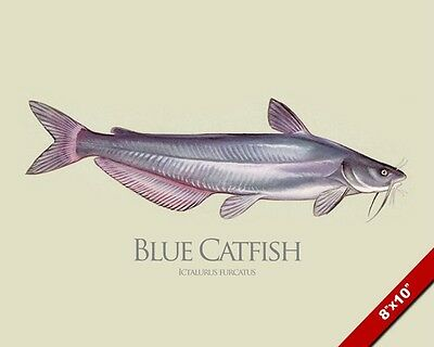 BLUE CATFISH FISH PAINTING MISSISSIPPI RIVER FISHING ART REAL CANVAS PRINT