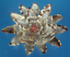 Sailors Valentine Craft Cut shells Vexillum plicarium 1 oz