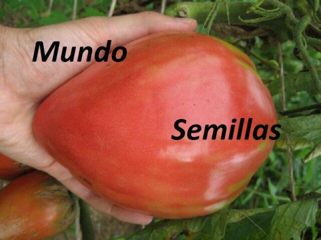 TOMATE CORAZON  BUEY  GIGANTE   1000  Semillas Seeds