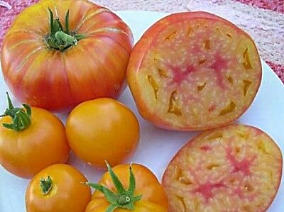 30 HILLBILLY TOMATO SEEDS HEIRLOOM 2017 ( $3.00 MAX SHIPPING! )
