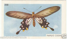 PAPILIO Losaria coon Atrophaneura Common Clubtail CHINA CHINE BUTTERFLY IMAGE