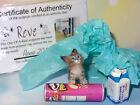 OOAK Realistic Miniature PET CAT Handmade 1:12 High Quality sculpture by Reve