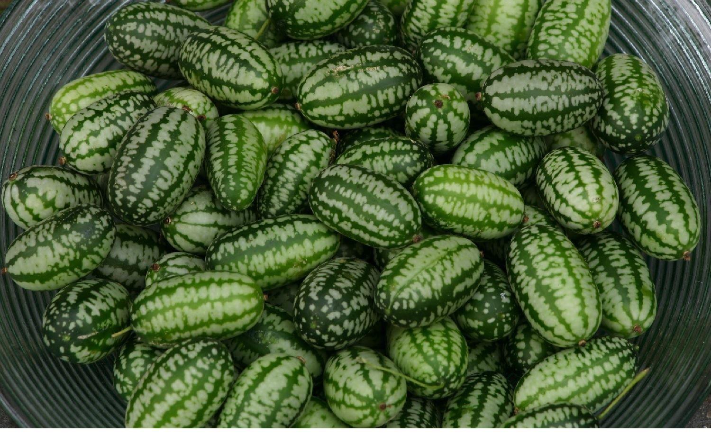 Vegetale-Cucamelon - 10000 semi-Pacchetto ingrosso