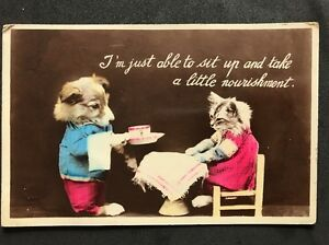 Vintage-Postcard-Animals-Cats-A21-Sit-Up-And-Take-A-Little-Nourishment-1938