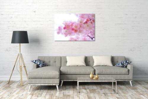Lein-Wand-Bild Blumenbilder Blumenfotos Kirchblütenbaum Nahaufnahme rosa Blüten