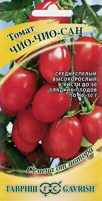 Tomato Chio Chio San Russian High Quality Seeds Non Gmo 4601729048937 Ebay