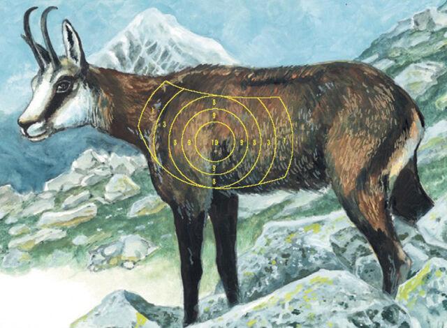 Zielscheibe Jagd | Rehbock, Keiler, Fuchs | 44 x61cm | Jungjäger | Bogensport