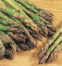 300 Asparagus Mary Washington Seeds Asparagus Seeds