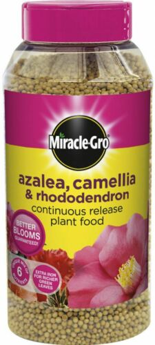 Camelia /& Rhododendron Pianta Per Cibo 1 KG SHAKER J MIRACLE-Gro lento rilascio Azalea