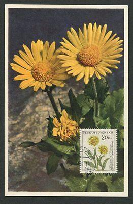 Cssr Mk 1961 Fauna Blumen Gemswurz Maximumkarte Carte Maximum Card Mc Cm D7920 Ein Bereicherung Und Ein NäHrstoff FüR Die Leber Und Die Niere Briefmarken Natur & Pflanzen
