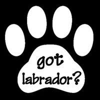 Got Labrador Dog Animal Pet Doggie Paw Print Vinyl Decal Sticker White 5x5