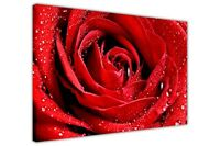 PINK RED ROSE PRINTS CANVAS PICTURES WALL ART POSTER FLORAL ART IMAGES HOME DECO