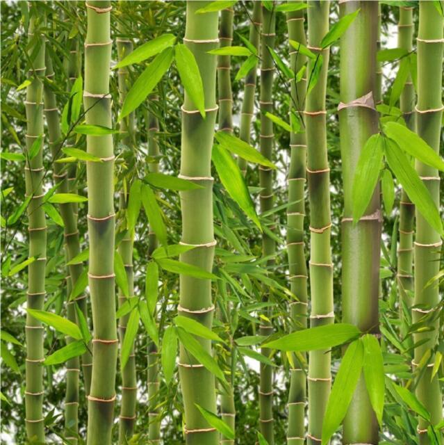 NEW LUXURY MURIVA RAINFOREST GREEN BAMBOO TREES LEAVES VINYL WALLPAPER J41504