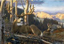 Evening Light by Tom Mansanarez Antelope Print 22.5x19