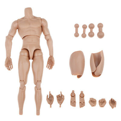 "1//6 Male Body Muscular Nude Figure for 12/"" ZC Dragon HOT TOYs Head Sculpt"