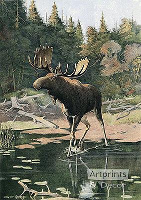 Art Print of Vintage Art The Moose by Oliver Kemp