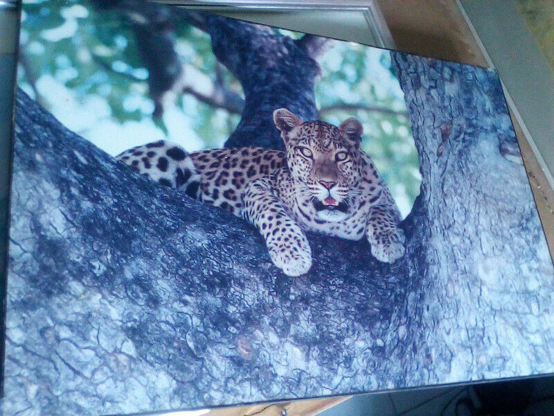 own your own leopard in a tree