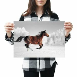 A3-Galloping-Brown-Horse-Horses-Poster-42X29-7cm280gsm-3965