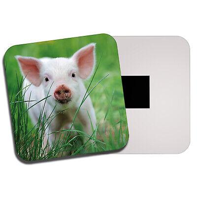 Mignon Rose Porcelet aimant de réfrigérateur-Cochon Bébé Animal Farm FARMER Kids Gift #13031
