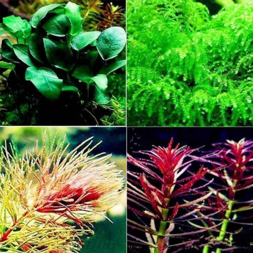 500Pcs Aquarium Plants Seeds Live Grass Water Aquatic Decoration Home Exotic