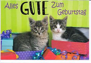 Klappkarte Zwei Kleine Katzen Geschenke Und Alles Gute Zum