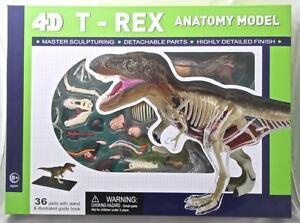 4D-T-Rex-Dinosaur-Anatomy-Model-with-Stand-Highly-Detailed-Detach-Parts-BUILD