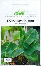 Banana seeds room Abyssinian / Musa ensete Hem Zaden 3 seeds Банан