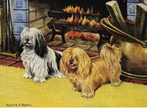 Lhasa Apso Vintage Color Dog Print MATTED