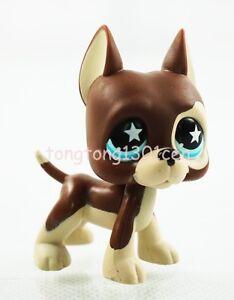 Rare Brown Dane Dog Puppy Star Eyes Hasbro Littlest Pet