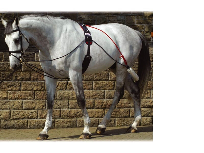 NEW John Whitaker Training System/Aid/Pessoa With Lunge Lunging Horse Roller