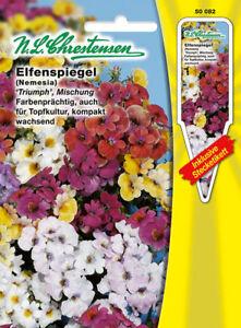Elfenspiegel-039-Triumph-039-Mischung-039-Nemesia-strumosa-039-auch-fuer-Topfkultur-50082