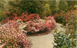 Postcard-Magnolia-Gardens-Charleston-SC