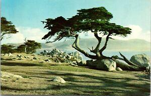 Vintage-postcard-Monterey-Cypress-Pebble-Beach-California-unposted-no-message
