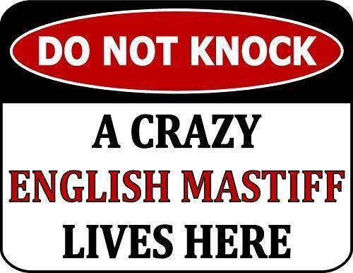 Do Not Knock A Crazy English Mastiff Lives Here Laminated Dog Sign